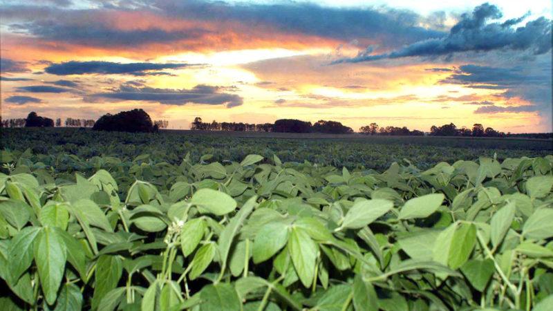 Paraná reduz em até 50% uso de agroquímicos na soja