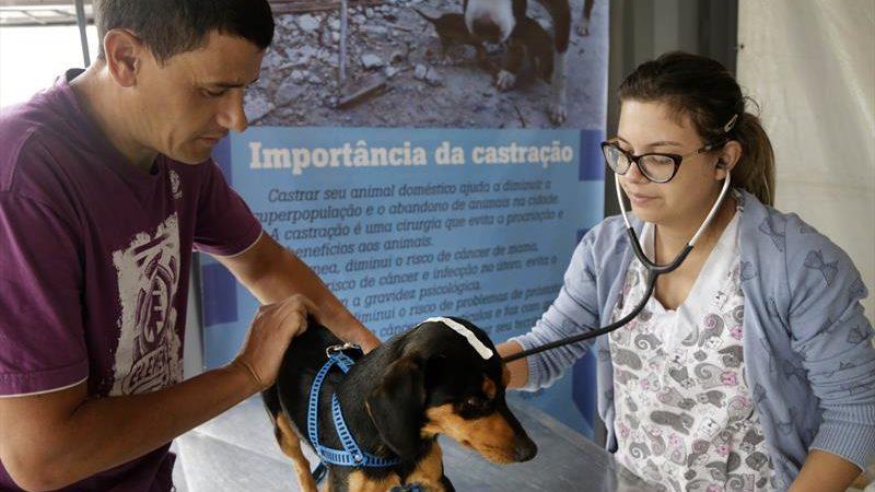 Cães e gatos têm castração gratuita no Salão Paroquial Santa Cândida